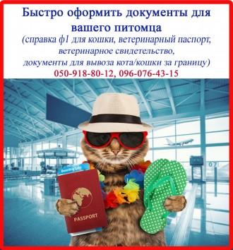 Срочно сопроводительные документы для кошки (справка ф1 и т.д.). Харьков. фото 1