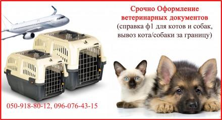 Срочно Оформление ветеринарных документов от 1 дня для котов, собак. Харьков. фото 1