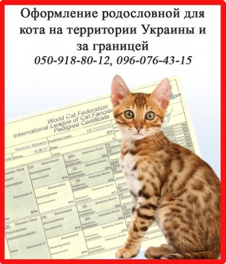 Оформление родословной для кота на территории Украины и за границей. Харьков. фото 1