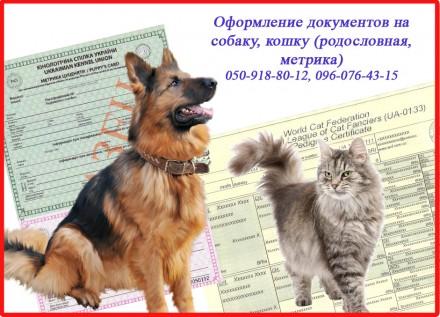 Оформление документов на собаку, кошку (родословная, метрика). Харьков. фото 1
