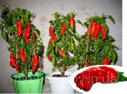Семена Секси перчики Chilly Willy Penis Peppers. Кременчуг. фото 1