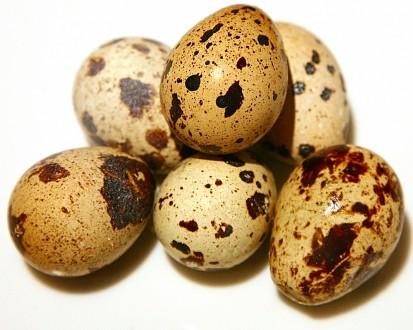 Инкубационное перепелиное яйцо. Рубежное. фото 1
