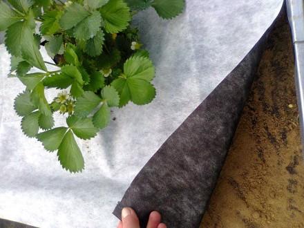 Агроволокно черно-белое Agreen 50 г/м (3,2х10). Киев. фото 1