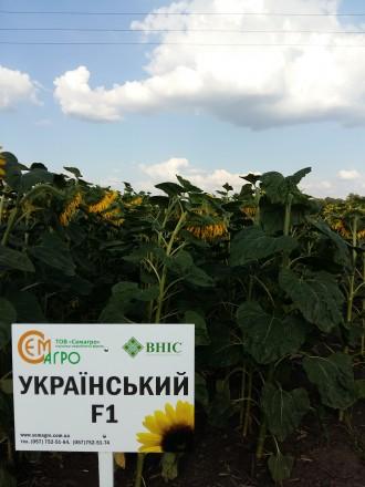 Український F1. Харьков. фото 1