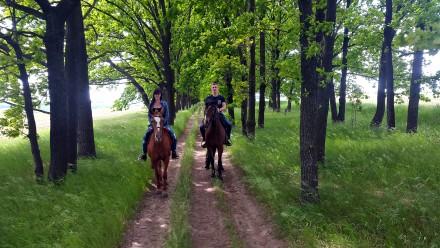 Индивидуальные и групповые прогулки на лошадях — это замечательный способ отдохн. Харьков, Харьковская область. фото 4