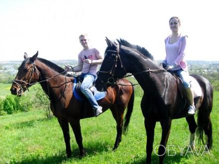 Индивидуальные и групповые прогулки на лошадях — это замечательный способ отдохн. Харьков, Харьковская область. фото 1