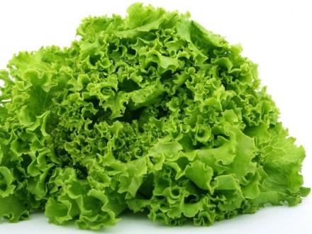 Продам салат,свежую зелень,пряные травы в ассортименте. Харьков. фото 1