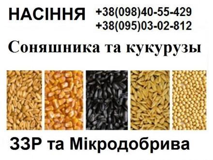 Продам семена подсолнуха, кукурузы, СЗР (Сингента,Лимагрейн,Пионер,Монсанто,ВНИС. Харьков. фото 1