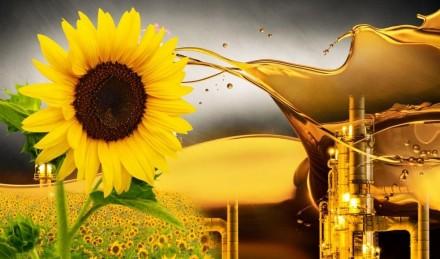 Завод по производству подсолнечного масла. Кропивницкий. фото 1