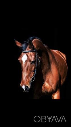 Катаем на лошади. Уроки верховой езды. Уроки конкура. Прокат лошадей. Чернигов, Черниговская область. фото 1