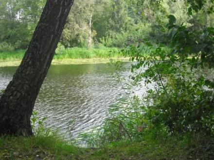 продам земельный участок в Ботаническом заказнике на берегу озера. Чернигов. фото 1