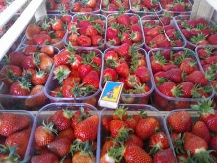 Продам ягоду клубники с поля ,сорта Ханей ,Джоли. Киев. фото 1