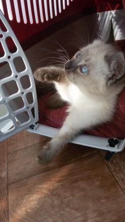 Котёнок ищет любящую семью.. Чернигов. фото 1