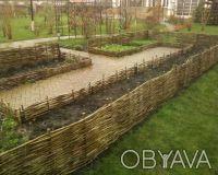 Производим плетеный забор из лозы. Материал - лещина, орешник. Забор производим . Чернигов, Черниговская область. фото 3
