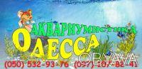 Аквариумистика, растения, рыбки, услуги. Одесса. фото 1