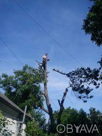 Спил деревьев. Днепр. фото 1