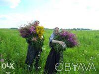 травы лекарственные. Харьков. фото 1