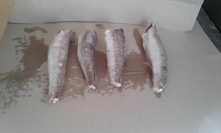 Морская рыба. Житомир. фото 1