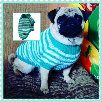 Теплий светр для мопса. Львов. фото 1