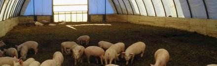 Каркасно-тентовые сооружения очень активно применяются в сельском хозяйстве и жи. Киев, Киевская область. фото 3