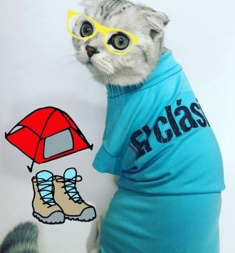 Одежка для кошек. Днепр. фото 1