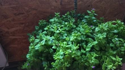 Продам комнатные растения. Мариуполь. фото 1