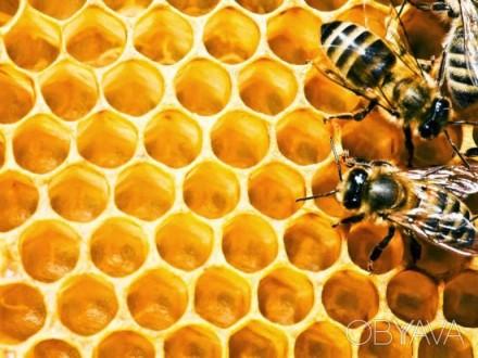 Натуральний мед з власної пасіки. Київська обл.. Киев. фото 1