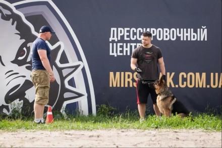 Дрессировка собак в Ирпене. Занятия от 100 грн. Буча. фото 1