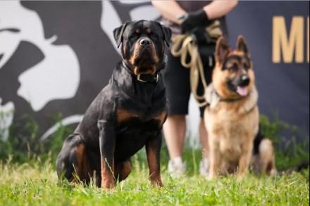 Школа обучения для собак. Занятия от 100 грн. Буча. фото 1