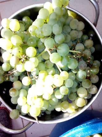 Продається виноград. Киев. фото 1