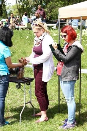 Продам щенка йоркширского терьера. Запоріжжя. фото 1