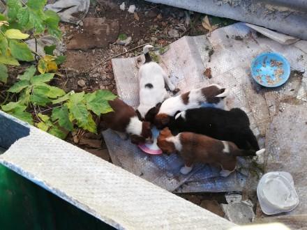 Бездомные щенки. Сумы. фото 1