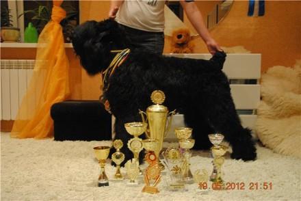 Русский черный терьер - щенки с документами FCI,прививки. Донецк. фото 1