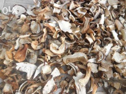 Білі гриби. Львов. фото 1