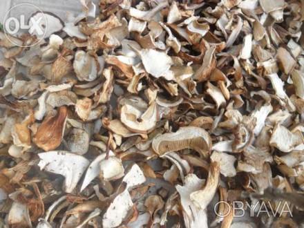 Продам сушені білі гриби. Зібрані у Жовківському районі Львівської області. Цін. Львов, Львовская область. фото 1