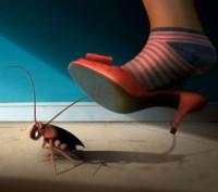 СЭС-ИНСПЕКЦИЯ - служба уничтожения насекомых и грызунов. Харьков. фото 1