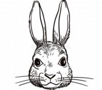 Голови кроля. Стрый. фото 1