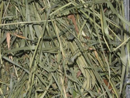 Cено зеленое луговое разнотравье для грызунов. Киев. фото 1