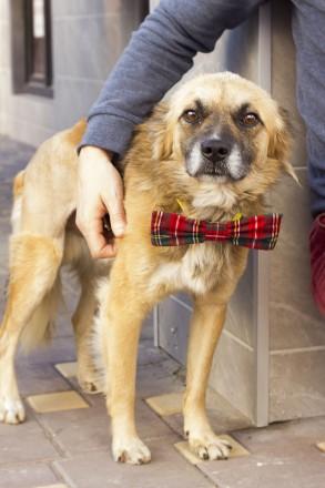 Пес ищет доброго хзяина. Киев. фото 1