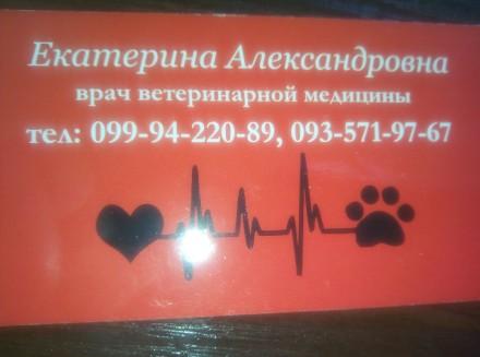 Ветеринарный врач на дом. Харьков. фото 1