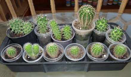 Продам кактусы. Запорожье. фото 1
