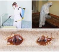 Уничтожение насекомых грызунов дезинсекция дератизация травля тараканов. Киев. фото 1