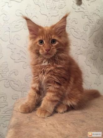 срочно продам котят. Борислав. фото 1