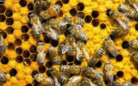 Бджолопакети,пчелопакеты. Ивано-Франковск. фото 1