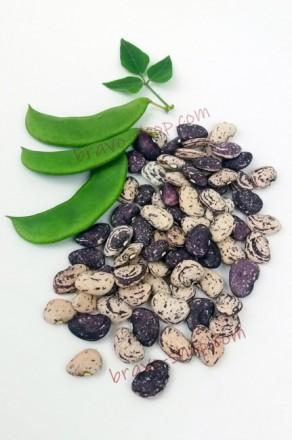 Фасоль лимская Мраморная, кустовая зерновая, 12 семян. Белая Церковь. фото 1