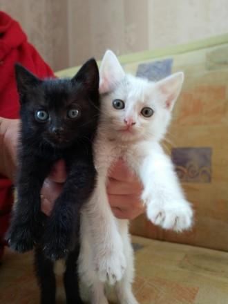Отдаю 2-х котят, мальчик и девочка. Киев. фото 1