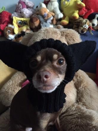Шапка для собаки . Шапка с закрытыми ушками для собаки .. Киев. фото 1