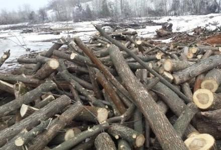 Продаем дрова Акации, диаметр дров от 8-30 см. кругляк, длина по 2 м. Выполняем . Чернигов, Черниговская область. фото 3