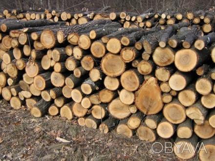 Продаем дрова Акации, диаметр дров от 8-30 см. кругляк, длина по 2 м. Выполняем . Чернигов, Черниговская область. фото 4