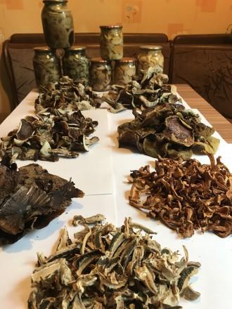 Белые грибы ( сухие и маринованные). Киев. фото 1